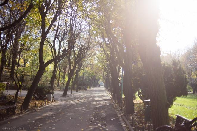 yongnuo-yn-35mm-03