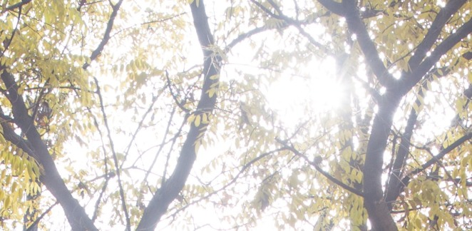 yongnuo-yn-35mm-16a